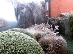 Year round plant border interest - winter hoar frost on new perennial border