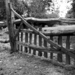 Paddock gate in cleft sweet chestnut
